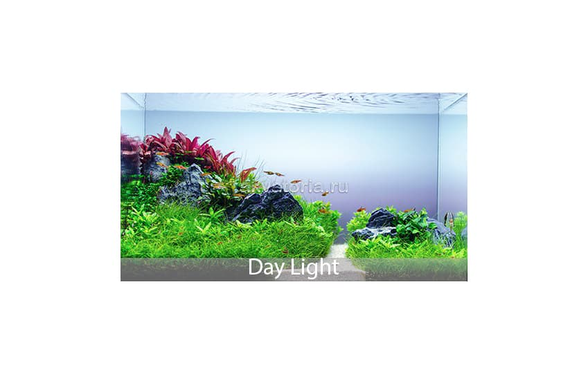 Освещение LED SCAPE Day Light